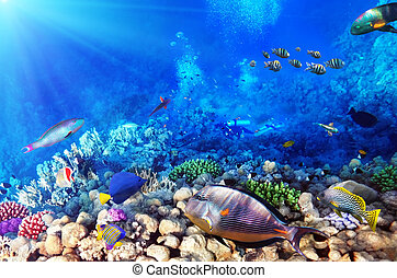 buzos, coral, y, pez, endeudado, sea.egypt