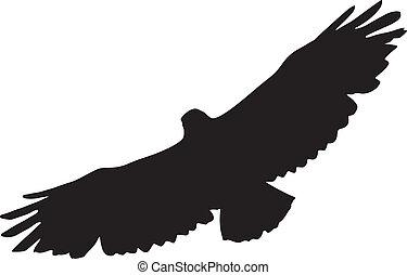 buzzard - silhouette of buzzard