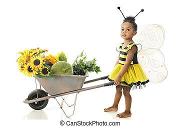 buzzi, girassol, abelha, amando