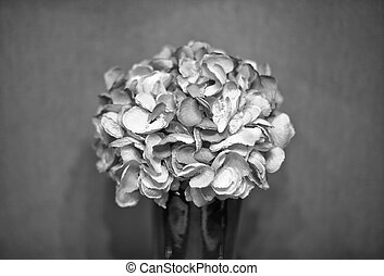 B&W Bouquet of flowers in a vase
