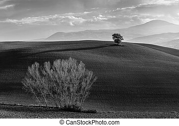 B/W Landscape with Trees