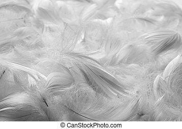 bw, plumas, plano de fondo
