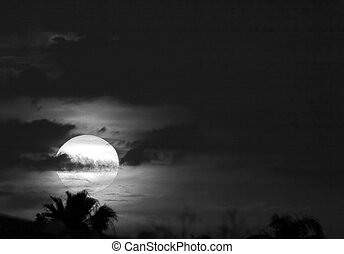 Black and White sunset with Palm tree tops.