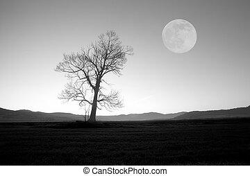 bw tree and moon