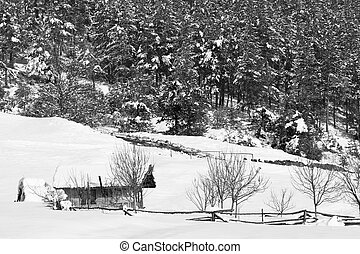 bw winter landscape