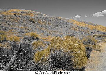 BW yellow desert landscape wood 2