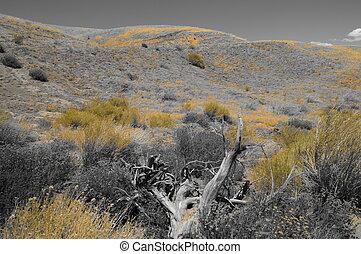 BW yellow desert landscape wood