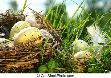 bygga bo, in, den, gräs, med, ägg