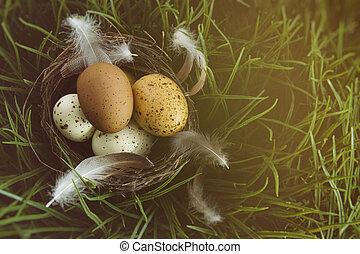bygga bo, med, fläckig, ägg, in, den, gräs