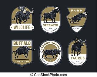 byki, buffalo.