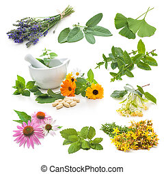 bylina, čerstvý, vybírání, hojivý
