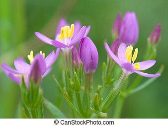 bylina, rośliny
