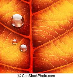 bystrý, autumn list