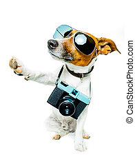 cámara fotográfica de la foto, perro
