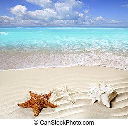 cáscara, caribe, estrellas de mar, tropical, arena, playa blanca