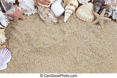cáscara, conchas, playa, marco, primer plano, mar, tomado, ...