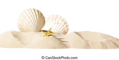 cáscara, en, playa