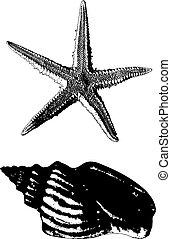 cáscara, estrellas de mar