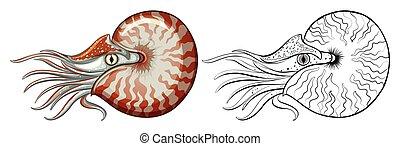 cáscara, nautilus, contorno, animal
