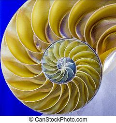 cáscara,  Nautilus