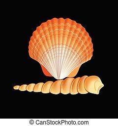 cáscara, vector., venera, concha marina, aislado, ...