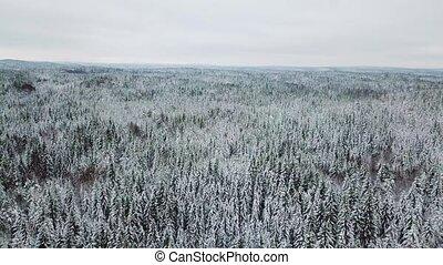 câmera, voando, lentamente, acima, grande, floresta, em, a,...