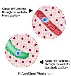 câncer, célula, apertos, através, navio