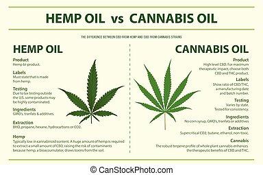 cânhamo, óleo, cannabis, infographic, horizontais, vs