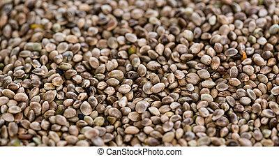 cânhamo, semente, fundo