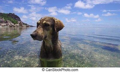 cão, água oceano, indianas, mar, ou