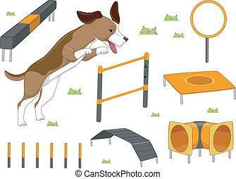 cão, agilidade, objetos