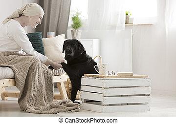 cão, assistente, dar, pata