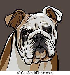cão, bulldog.