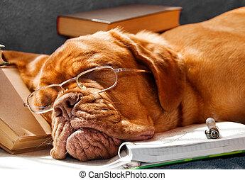 cão, caiu, adormecido
