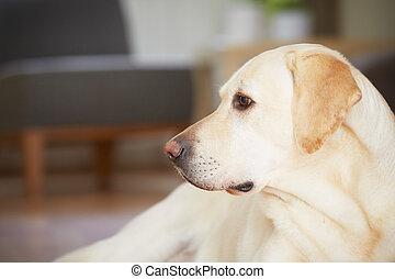 cão, casa