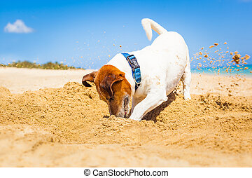 cão, cavando, um, buraco