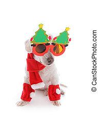cão, celebra, natal