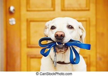 cão, com, correia