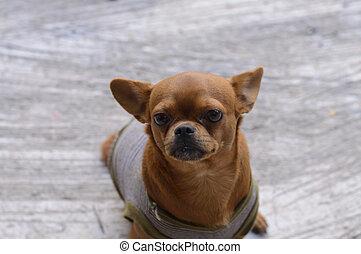 cão, de, quadro