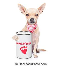 cão, doação