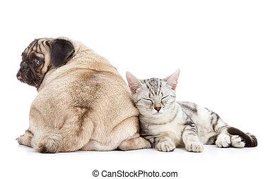 cão, e, gato