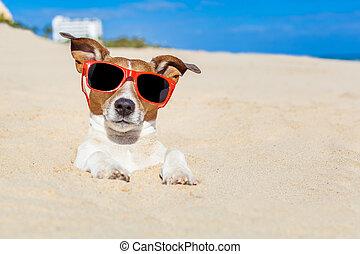 cão, enterrado, em, areia