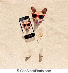 cão, enterrado, em, areia, selfie