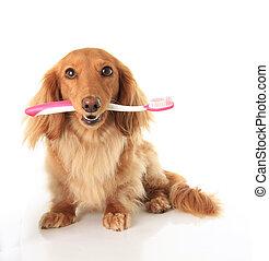 cão, escova de dentes