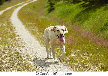 cão, estrada