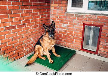 cão, examinando, em, veterinário, clínica, nenhuma pessoas