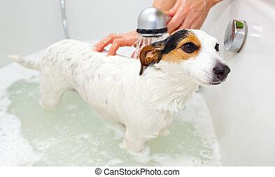 cão, fazendo exame um banho, em, um, banheira