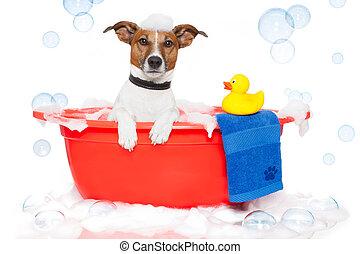 cão, fazendo exame um banho, em, um, coloridos, banheira,...