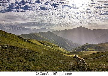 cão, ficar, ligado, um, penhasco, em, montanhas