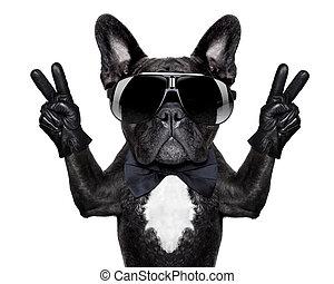 cão, fresco